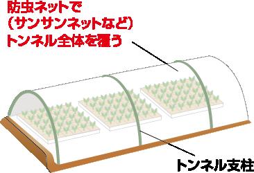 育苗中の害虫予防