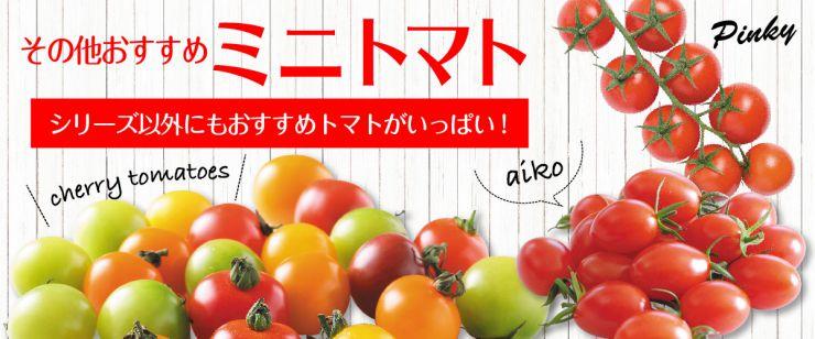 おすすめミニトマト