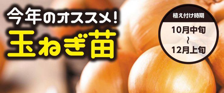 玉ねぎ苗のイメージ